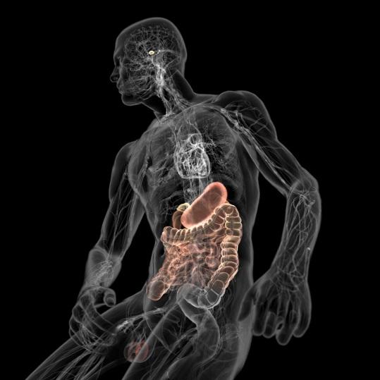 Время очищения организма от курения: эндокринная система